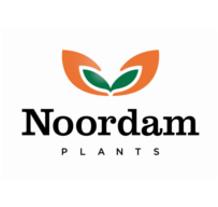 Logo - NOORDAM