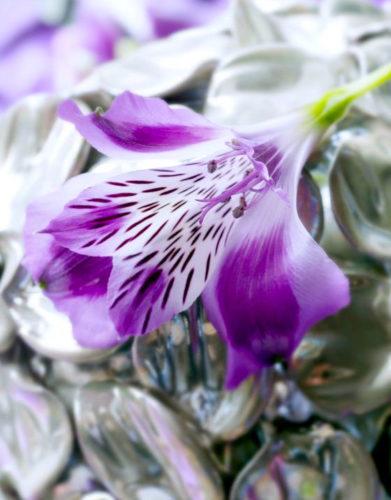 Alstroemeria Pot Plant