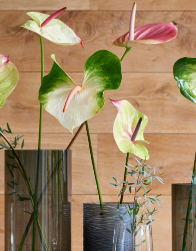 Anthurium Cut flower
