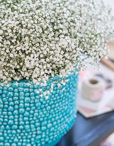 Gypsophila Cut Flower
