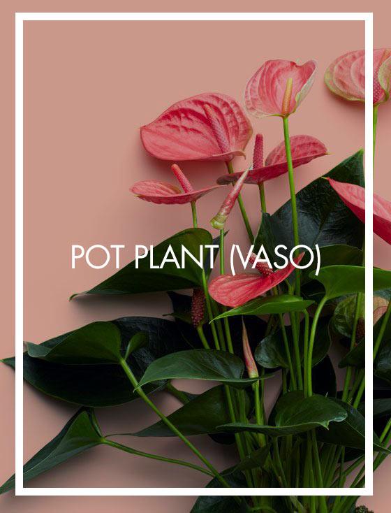 POT PLANT (VASO)