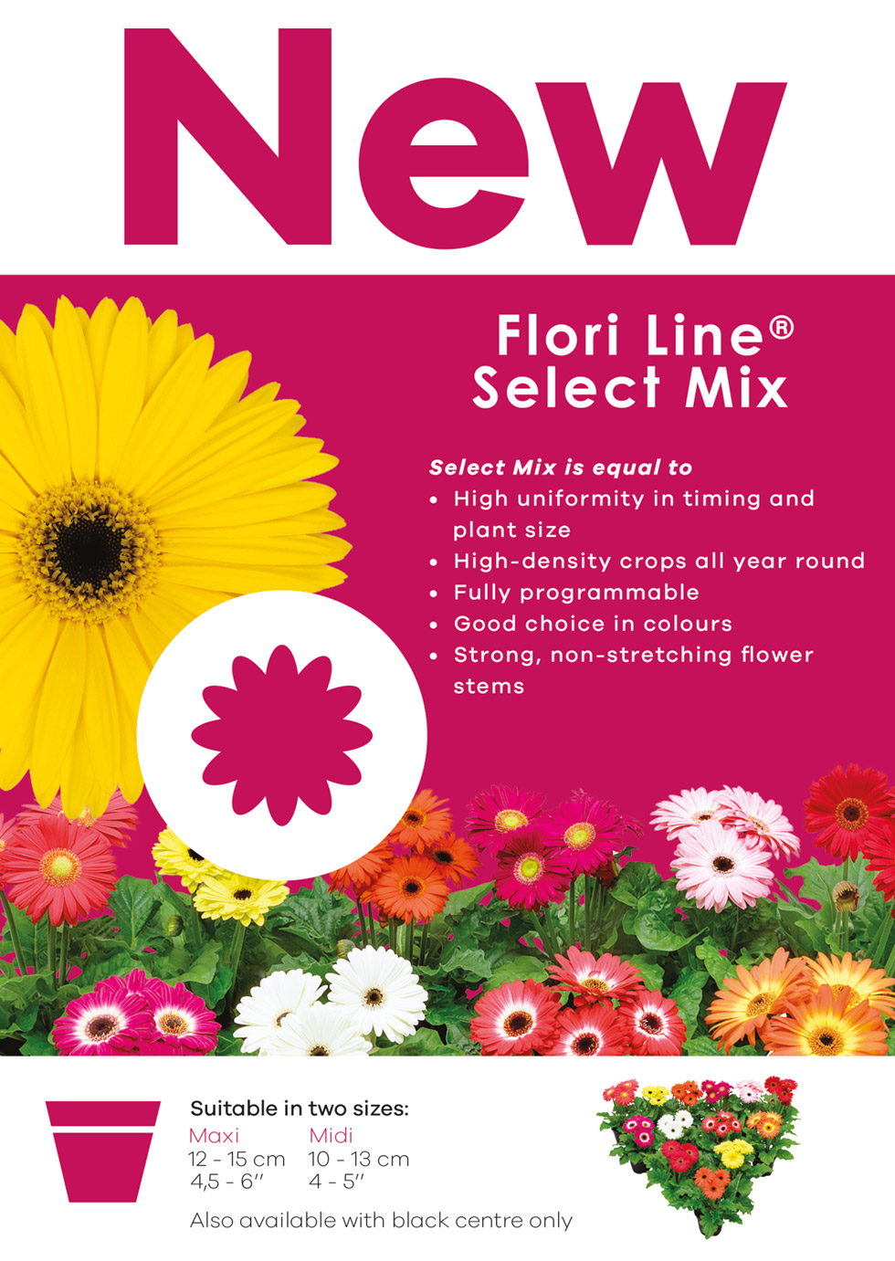 flori-line-select-mix_low-ress-1-cover